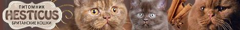 Питомник британских кошек HESTICUS